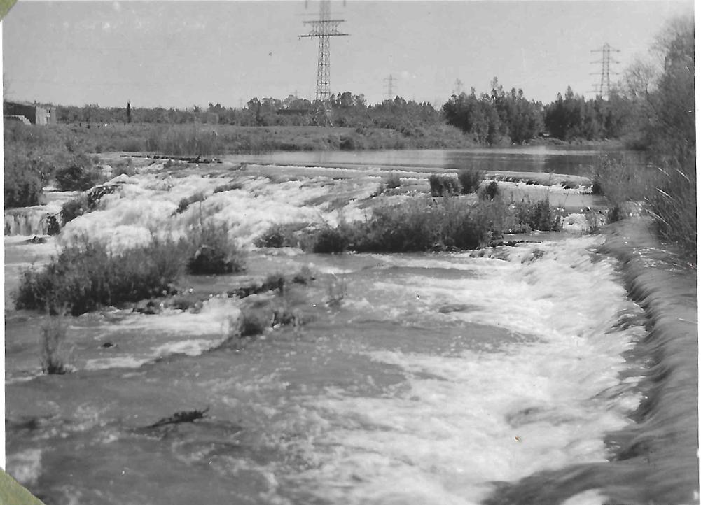 الربيع 1900--2.jpg