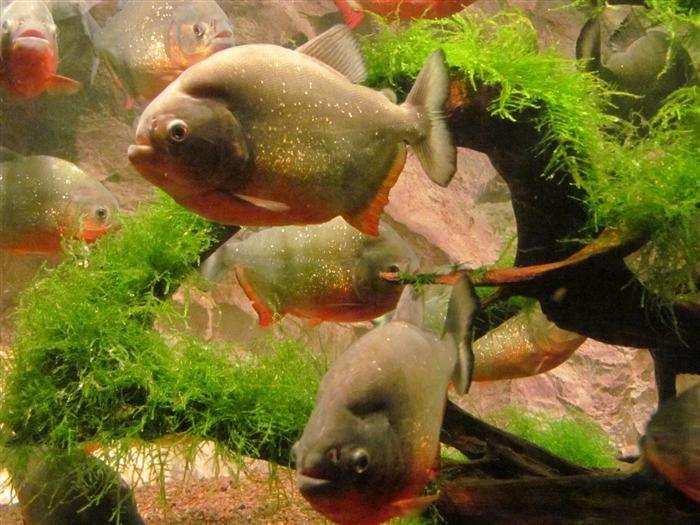 54 السمك في ايلات.jpg