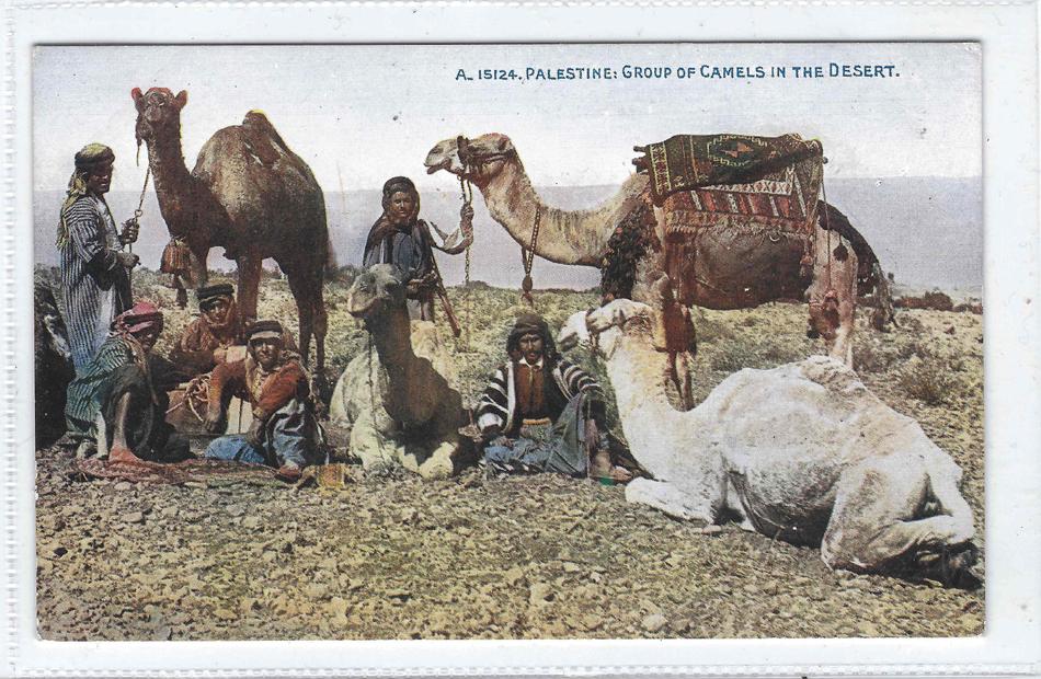 من الجمال في الصحراء- فلسطين.jpg